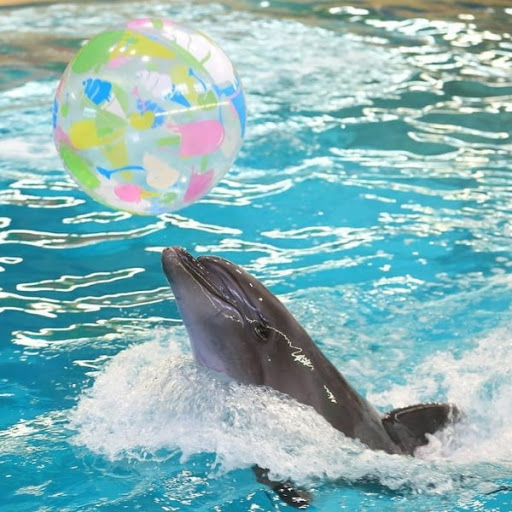 Ярославль. Дельфинарий и зоопарк